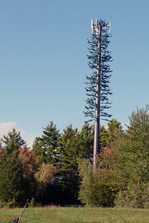 cell tower disguised as a pine tree